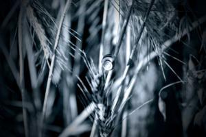 ©erekanovic, blues10
