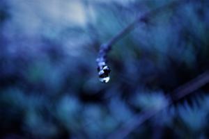 ©erekanovic, blues2