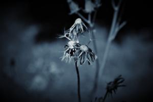 ©erekanovic, blues5