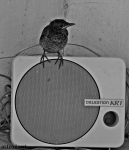 zvučnik